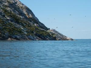 Iles pelerins-kayak-tricot-fleuve-petits pingouins